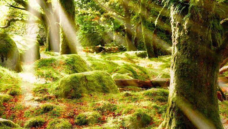Skoven